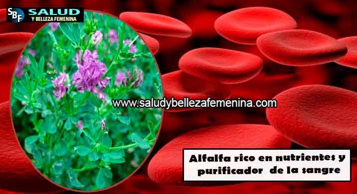 Alfalfa rico en nutrientes y purificador de la sangre