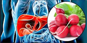 Bebida natural de rábano para proteger tu hígado y vesícula